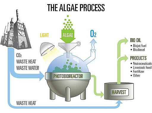 Algae Phototroph Process